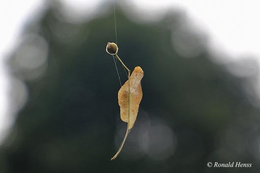 Herbststimmung - Samen - Pflanzenfotos
