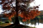 Herbst im Deutsch-Französischen Garten