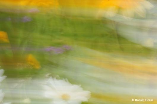 Fotokunst - Wischbunt - Wischblüten
